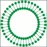 Avanti Polar Lipids, Inc. Lab / Facility Logo