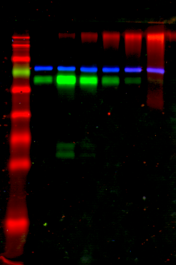 Demo_blot_3-color.png