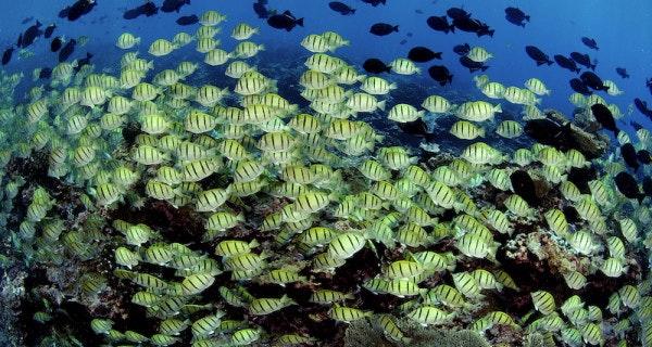 Enric-School-of-Fish-small-600x320.jpeg