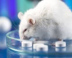 Rat with Pills Pic.jpg