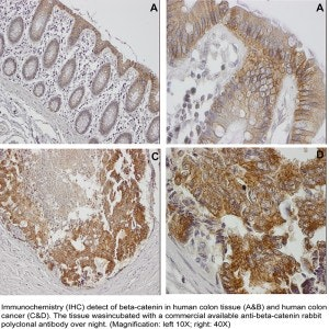 Histology-3-300x300.jpg