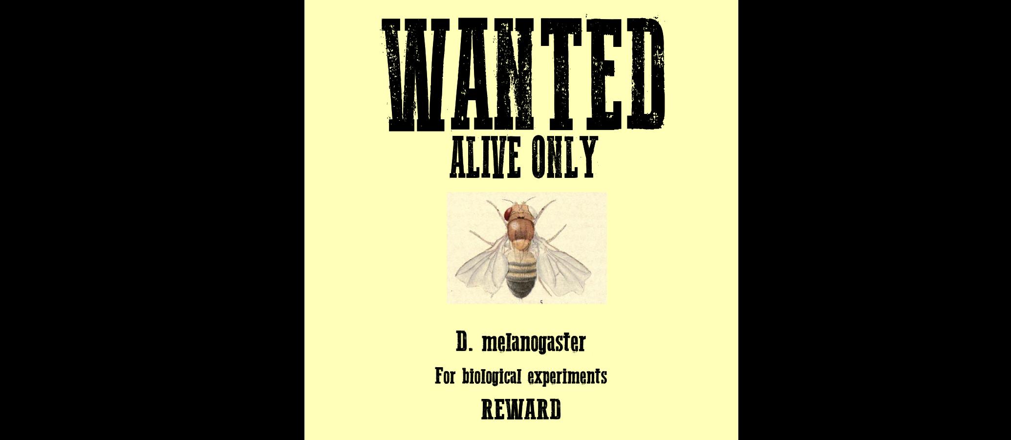 wantedposter.png